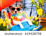 jack russell dog relaxing on a... | Shutterstock . vector #619428758