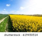 field of rapeseed  aka canola... | Shutterstock . vector #619450514