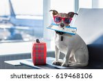 Stock photo holiday vacation jack russell dog waiting in airport terminal ready to board the airplane or plane 619468106
