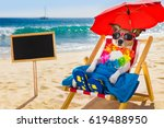 Stock photo jack russel dog resting and relaxing on a hammock or beach chair under umbrella at the beach ocean 619488950
