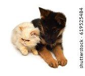 yellow kitten of a persian cat... | Shutterstock . vector #619525484
