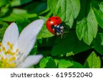 a ladybug sitting on a green... | Shutterstock . vector #619552040