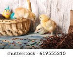 easter chicks in basket with...