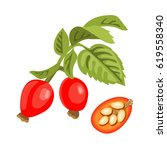 rose hip twig with leaves ... | Shutterstock .eps vector #619558340