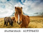 Horses In The Mountains In...