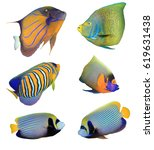 angelfish reef fish isolated on ... | Shutterstock . vector #619631438