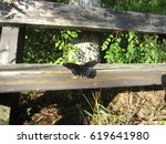 Red-spotted purple butterfly warming its wings on a park bench in the bright sun.