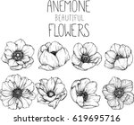 drawing anemone flowers... | Shutterstock .eps vector #619695716