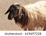 sheep | Shutterstock . vector #619697228