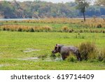 zambia   hippo in np lower... | Shutterstock . vector #619714409