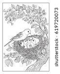 birds birds nest coloring... | Shutterstock .eps vector #619720073
