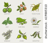 set of herbs and plants hand... | Shutterstock .eps vector #619885310