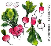 radish. vegetables painted with ... | Shutterstock .eps vector #619887410