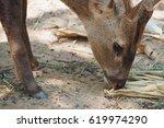 Close Up Of Brown Deer Eating...