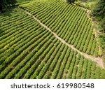 tea garden  aerial photography | Shutterstock . vector #619980548