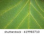 abstract leaf texture  leaf... | Shutterstock . vector #619983710
