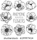Stock vector anemone flowers drawing illustration vector and clip art 619997414