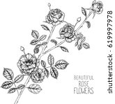 rose flowers drawing... | Shutterstock .eps vector #619997978