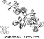 rose flowers drawing... | Shutterstock .eps vector #619997996