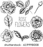 rose flowers drawing... | Shutterstock .eps vector #619998008