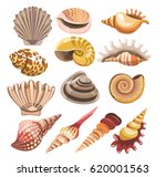 shells or seashells vector... | Shutterstock .eps vector #620001563