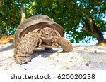 laughing turtle  seychelles... | Shutterstock . vector #620020238
