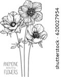 anemone flowers drawing vector... | Shutterstock .eps vector #620027954