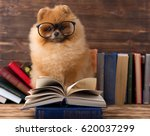 Clever Pomeranian Dog With A...