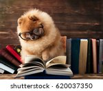 clever pomeranian dog with a... | Shutterstock . vector #620037350