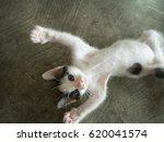 cute little black and white... | Shutterstock . vector #620041574