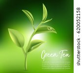 green tea green tea leaf.... | Shutterstock .eps vector #620052158