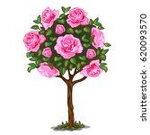 Flowering Tree Bonsai With Pink ...