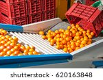 the production line of citrus... | Shutterstock . vector #620163848