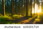 silent forest in spring with... | Shutterstock . vector #620201714