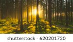 silent forest in spring with... | Shutterstock . vector #620201720