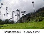 cocora valley hill | Shutterstock . vector #620275190