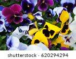 Many Yellow  Purple  Blue Pans...