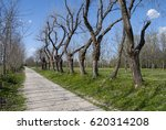 tree lined street | Shutterstock . vector #620314208