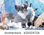 Stock photo chihuahua puppy and sea wheel 620324726