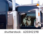 two dogs behind the glass... | Shutterstock . vector #620342198