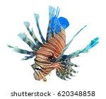 Lionfish Fish Isolated On Whit...