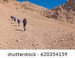 Walking In The Desert Between...