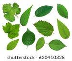 set of beautiful green spring... | Shutterstock . vector #620410328
