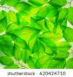 Fresh Green Leaf Pattern On Th...