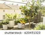 city terrace in spring  balcony ... | Shutterstock . vector #620451323