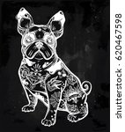 vintage style beautiful bulldog ... | Shutterstock .eps vector #620467598