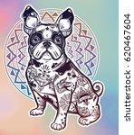 vintage style beautiful bulldog ... | Shutterstock .eps vector #620467604