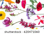 beautiful mixed colorful...   Shutterstock . vector #620471060
