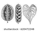 tropical leaf illustration ... | Shutterstock .eps vector #620472248