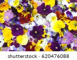 edible flowers   food flowers   ... | Shutterstock . vector #620476088